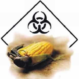 Deset základních důvodů proč říct NE společnosti Monsanto