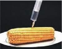 Geneticky upravené rostliny